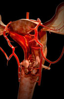 arteries of female reproductive system