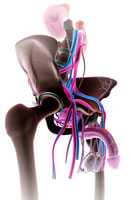 urinary system 11037009423| 写真素材・ストックフォト・画像・イラスト素材|アマナイメージズ