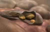 Merozoites of malaria