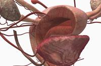 uterine cavity