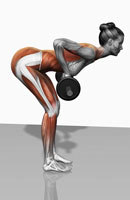 Barbell bent over row exercises