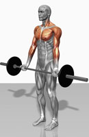 Biceps curl (Part 2 of 2)