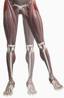 Thigh/lower limb abduction
