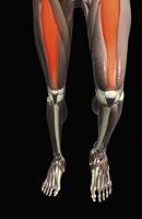 Thigh flexion
