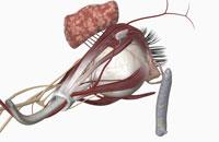 External anatomy of eye