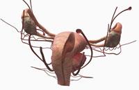 uterine cavity 11037010387| 写真素材・ストックフォト・画像・イラスト素材|アマナイメージズ
