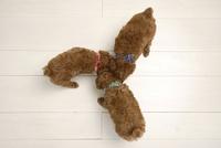 リビングの床でごはんを食べる子犬