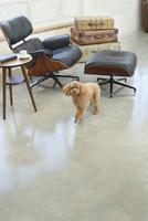 犬と海外風のリビングルームの合成向け背景素材