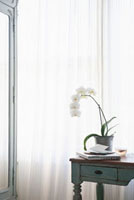 Orchid and laptop with letters on table at window 11044012163| 写真素材・ストックフォト・画像・イラスト素材|アマナイメージズ