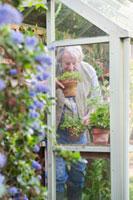 Gardener smells fresh herbs