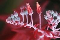 Succulent plant flowering close up
