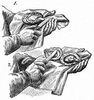 牡蠣を開ける(イラスト)
