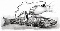 魚の鱗を取る(イラスト) 11047005822| 写真素材・ストックフォト・画像・イラスト素材|アマナイメージズ