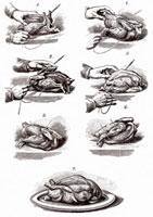 鳥をくくりつける(イラスト) 11047005838| 写真素材・ストックフォト・画像・イラスト素材|アマナイメージズ