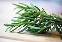 Rosemary Sprigs; Close Up