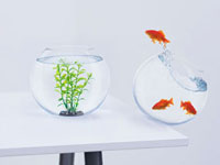 Goldfish in falling fishbowl jumping towards fishbowl with p