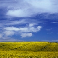 Rolling green hills in rural landscape