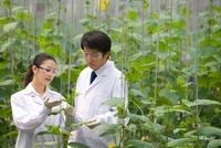 植物の観察をする研究者