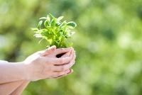 植物を持つカップルの手