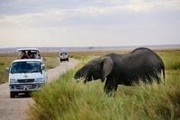 サファリを楽しむ車とアフリカゾウ