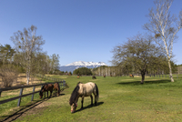 雪の積もった御嶽山と牧場