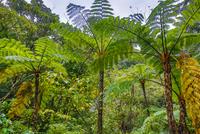 奄美大島のジャングル
