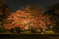 秋の六義園