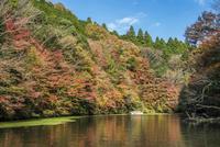 秋の亀山湖