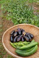 収穫イメージ 笊の上の野菜