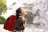 笑顔の新入学の女の子横顔と桜