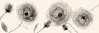 フラワーレントゲン写真 11070003261| 写真素材・ストックフォト・画像・イラスト素材|アマナイメージズ