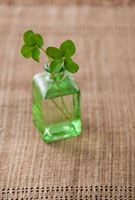 ガラスの小瓶に入った四つ葉のクローバー