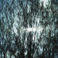 木の枝と光 11070008866| 写真素材・ストックフォト・画像・イラスト素材|アマナイメージズ