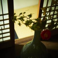 和室に活けた花 11070009522| 写真素材・ストックフォト・画像・イラスト素材|アマナイメージズ