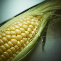 トウモロコシ 11070009628| 写真素材・ストックフォト・画像・イラスト素材|アマナイメージズ