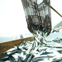 魚の水揚げ