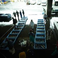 魚市場 11070009639| 写真素材・ストックフォト・画像・イラスト素材|アマナイメージズ