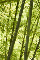 竹 11070009651| 写真素材・ストックフォト・画像・イラスト素材|アマナイメージズ