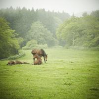 牧場の馬 11070009679| 写真素材・ストックフォト・画像・イラスト素材|アマナイメージズ