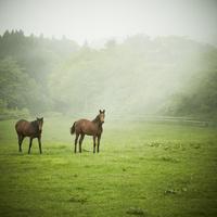 牧場の馬 11070009680| 写真素材・ストックフォト・画像・イラスト素材|アマナイメージズ