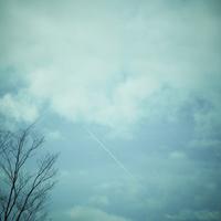 飛行機雲と木立