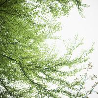 新緑 11070009828| 写真素材・ストックフォト・画像・イラスト素材|アマナイメージズ