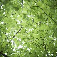 新緑 11070009864| 写真素材・ストックフォト・画像・イラスト素材|アマナイメージズ