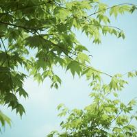 新緑 11070009867| 写真素材・ストックフォト・画像・イラスト素材|アマナイメージズ