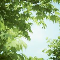 新緑 11070009868| 写真素材・ストックフォト・画像・イラスト素材|アマナイメージズ