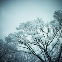 冬の木立 11070009876| 写真素材・ストックフォト・画像・イラスト素材|アマナイメージズ