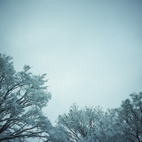 冬の木立と空