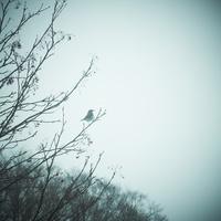 冬の木立と野鳥