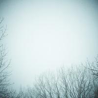冬の木立と空 11070009883| 写真素材・ストックフォト・画像・イラスト素材|アマナイメージズ