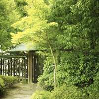 日本家屋と緑の木々